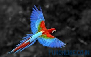 Great Colorful Parrot