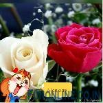 TMPDOODLE1471716603664